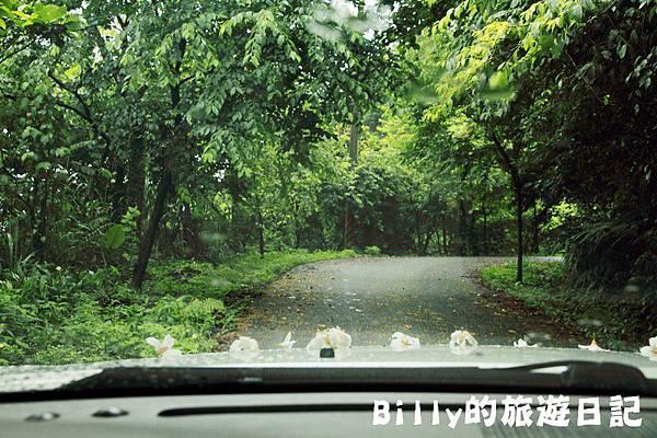 基隆暖暖桐花31.JPG