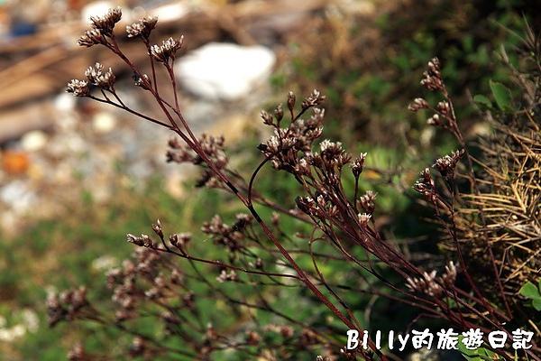 東莒犀牛嶼053.jpg