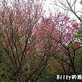 基隆紅淡山053.jpg