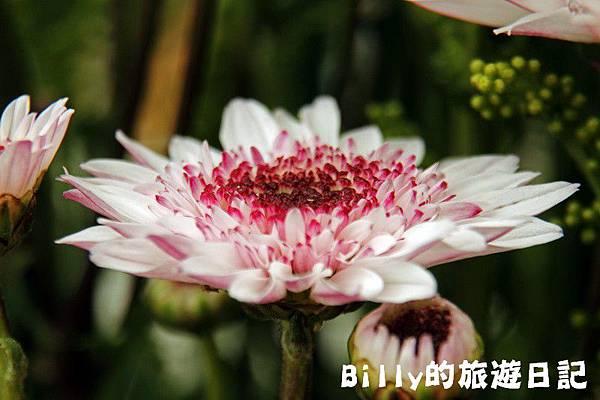 花卉圖片14.JPG