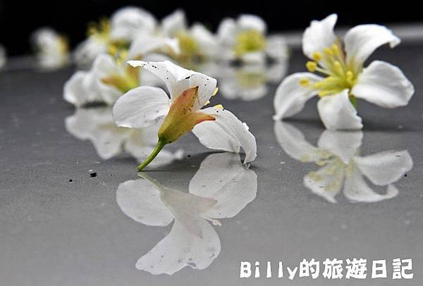 基隆暖暖桐花12.JPG