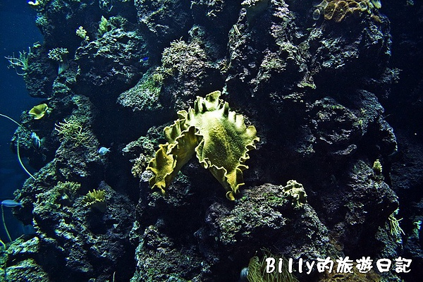 國立海洋生物博物館018.jpg