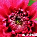 花卉圖片15.JPG