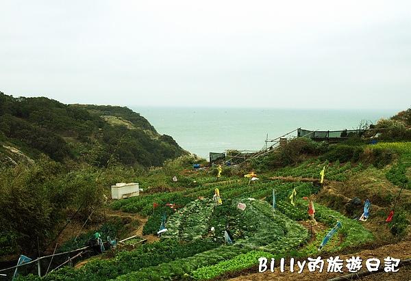 東莒的白菜10.jpg