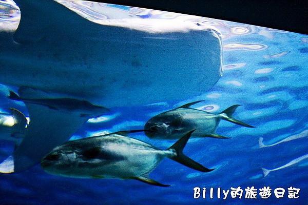 國立海洋生物博物館006.jpg