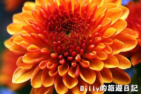 花卉圖片07.JPG