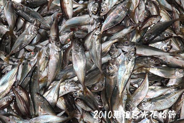 2010馬祖莒光花蛤節活動照片058.JPG