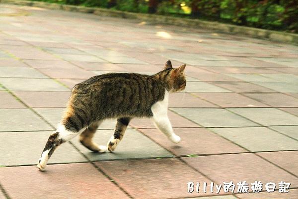 台北市植物園26.jpg