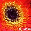 花卉圖片03.JPG