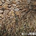 花卉圖片25.JPG
