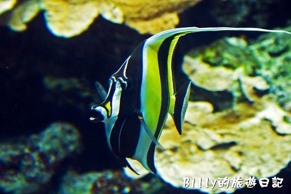 國立海洋生物博物館013.jpg