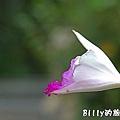 台北市植物園04.jpg