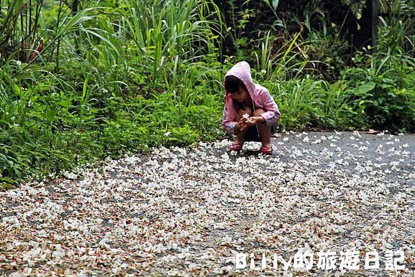 基隆暖暖桐花16.JPG
