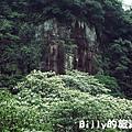 基隆暖暖桐花34.JPG