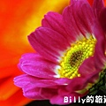 花卉圖片11.JPG