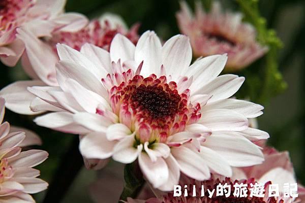 花卉圖片04.JPG