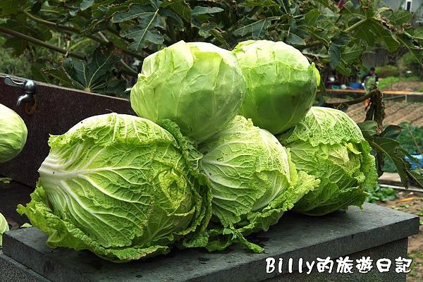 東莒的白菜13.jpg