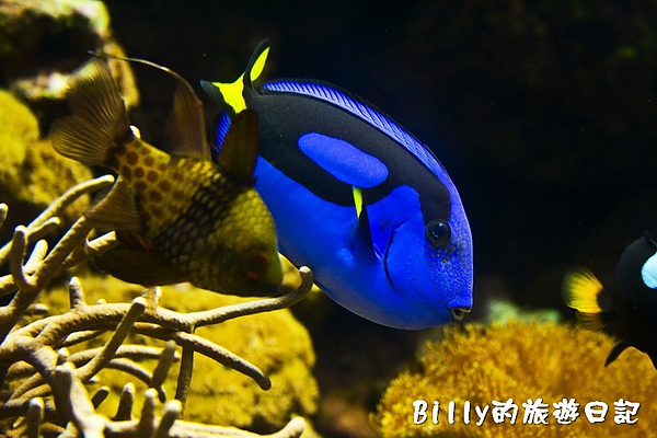國立海洋生物博物館003.jpg