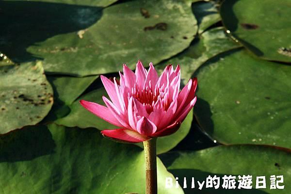七堵苓蘭荷花池16.JPG