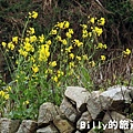 花卉圖片26.JPG