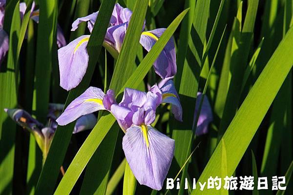 七堵苓蘭荷花池13.JPG