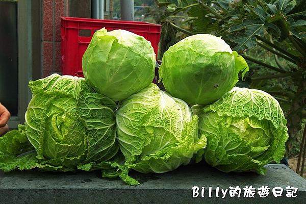 東莒的白菜12.jpg