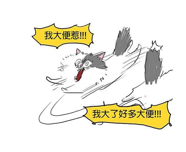 fb貓咪大便瘋3.jpg