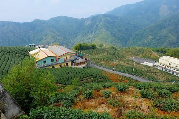雍富茶莊與八卦茶園