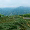 象徵八卦茶園意象的斗笠茶園