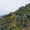 螺山自然步道植被