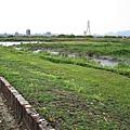 華江雁鴨自然公園(艋舺碼頭王公宮口)