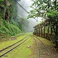 溶入山嵐雲霧中的森林鐵道