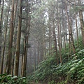 森林鐵道霧氣迷濛