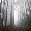 山林鐵道溶進柔亮迷霧