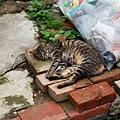 睡懶覺的貓咪