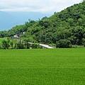 翠綠稻田浮上縣道197