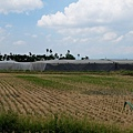 萬丹農田第一期稻作收割完畢