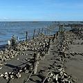灘岸上的蚵田