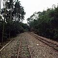 木履寮往竹崎方向,鐵道旁種有檳榔樹