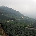 往山下望去的茶園風景