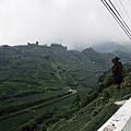 山坡上的茶園