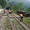 林務局鐵路工程小組正在勘驗鐵軌