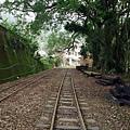鐵道旁有樟樹種植