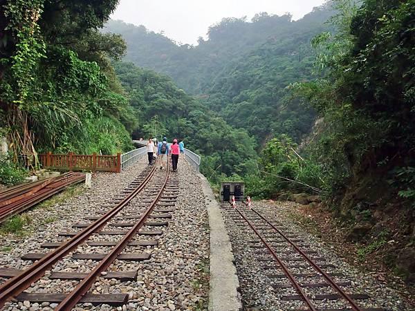阿里山鐵路進入樟腦寮鐵橋