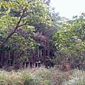 2013孤立荒野的劉家古厝
