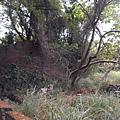 2013荒草叢生的庭院
