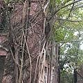 2013磚牆上枝幹蔓延