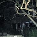 2011一瞥夜晚的民雄鬼屋