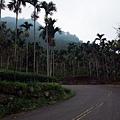 塔那歐茲,檳榔樹園