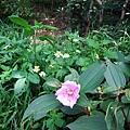 野牡丹與野薑花